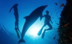 رحلات الغوص تحت الماء في أنطاليا