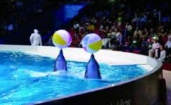 رحلة أكوالاند و عرض الدلافين في أنطاليا