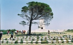 2 Days Tour to Gallipoli and Troy